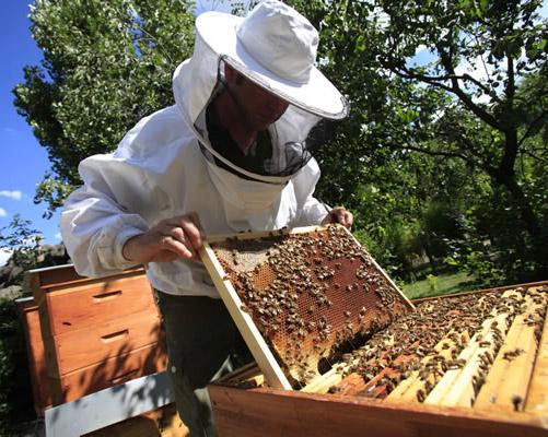 Miel-jardin-acclimatation